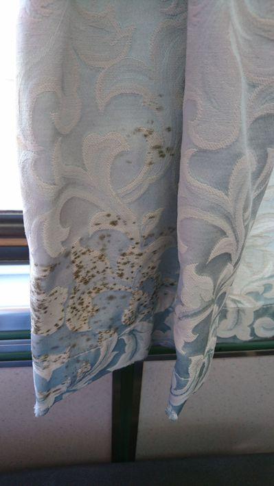 一名女網友搭乘台鐵時發現旁邊的窗簾發霉。 圖擷自《Dcard》