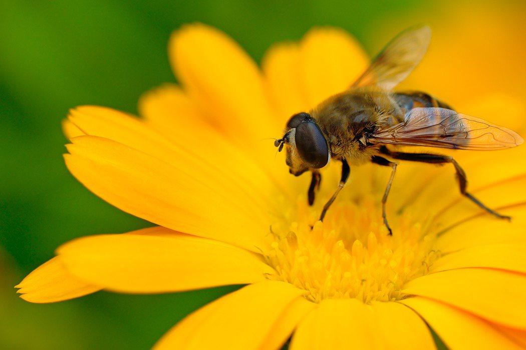 蜂螫治療主要原則是「儘速去除螫針和毒囊」、「局度冰敷」、「盡快就醫,使用止痛或抗...