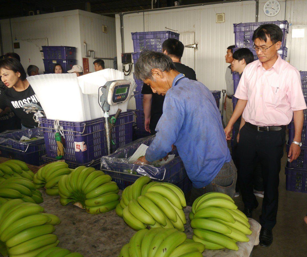 農委會主委陳吉仲(右)到高雄旗山關切香蕉產銷情況。記者徐白櫻/攝影