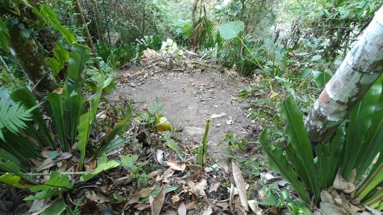 初步會勘尚未發現現場有黑熊留下的足跡或活動的證據。記者謝恩得/翻攝