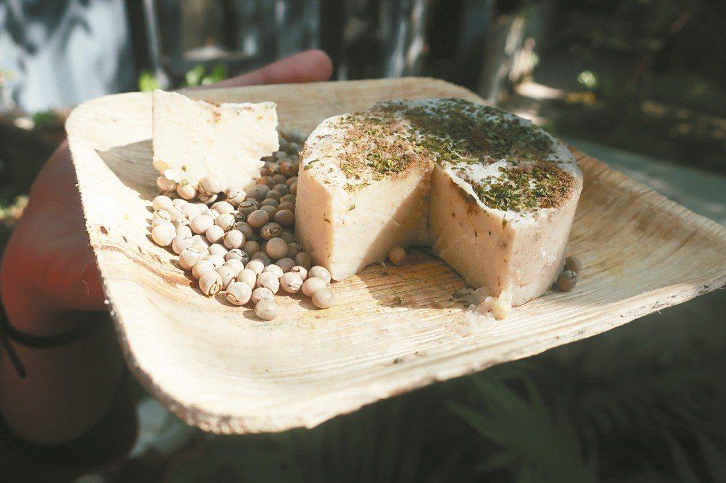 用樹豆做成的全素起司。 圖/朱慧芳