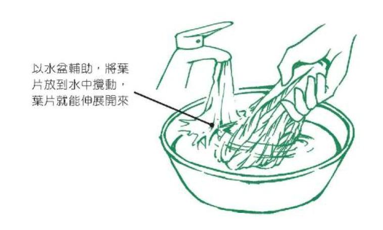 ●以水盆輔助,將葉片放到水中攪動,葉片就能伸展開來 圖/摘自《正確洗菜,擺脫農藥...