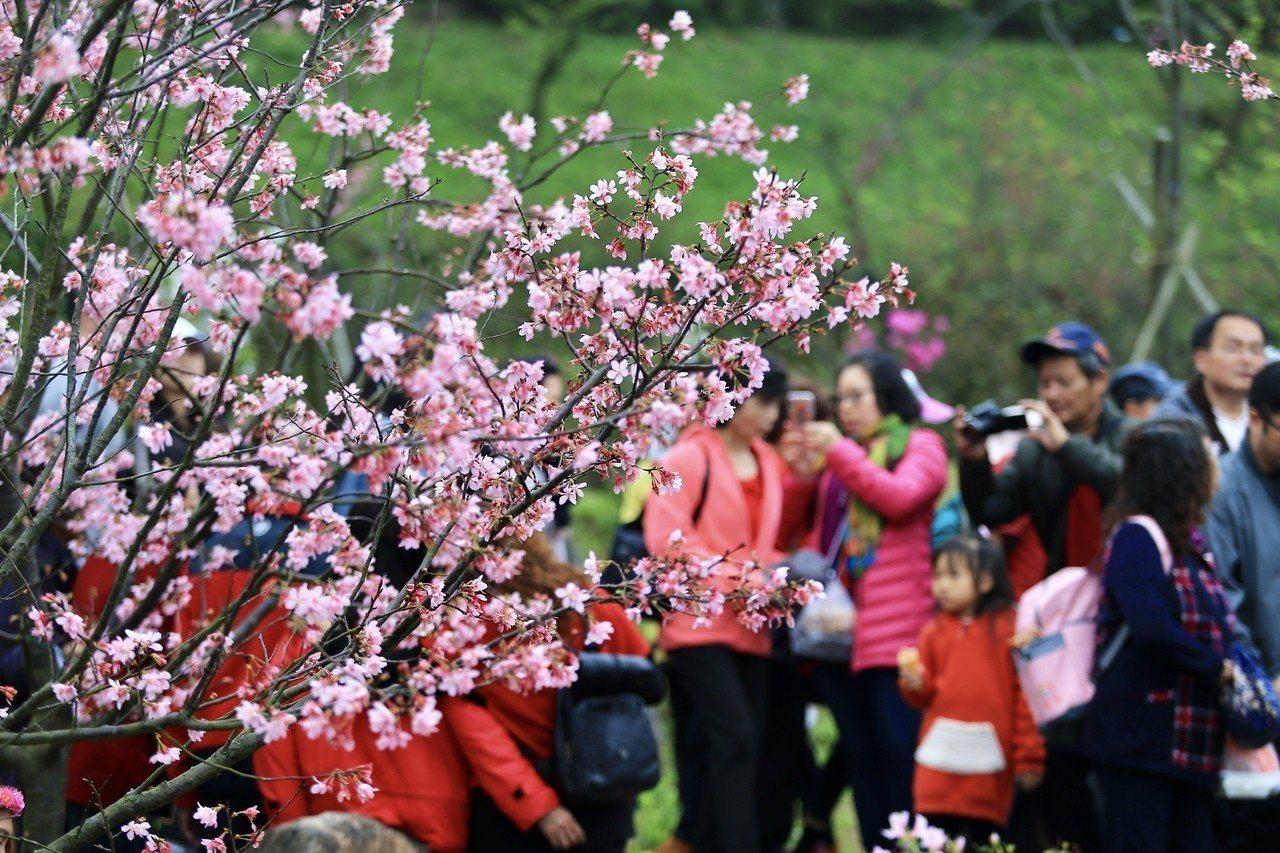 交通部觀光局公布春遊補助方案。 報系資料照