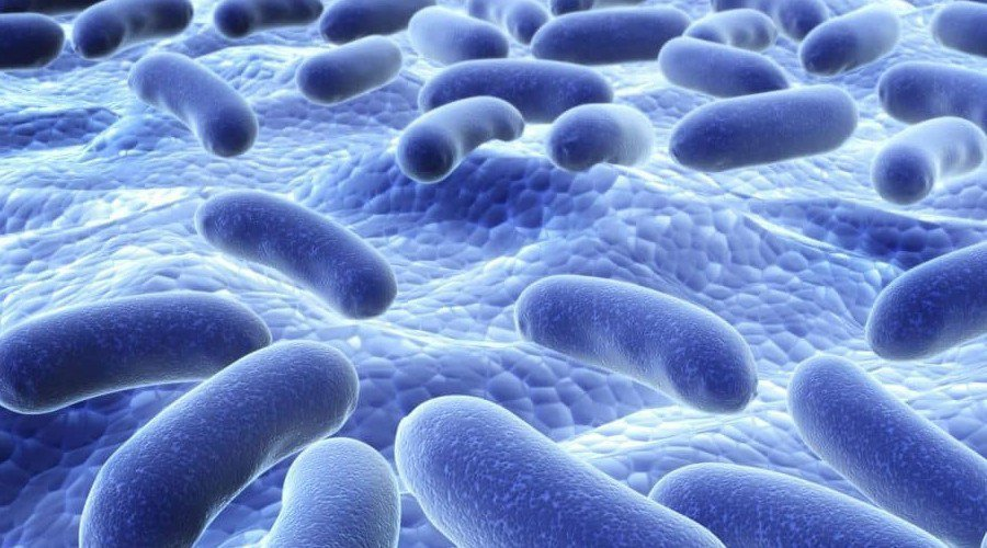 豐華生技的專利原料「益萃質」是益生菌代謝產物,是調控人體腸道健康最直接的物質。 ...