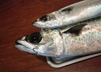 新鮮的魚眼睛。圖/鄭雅嬬提供