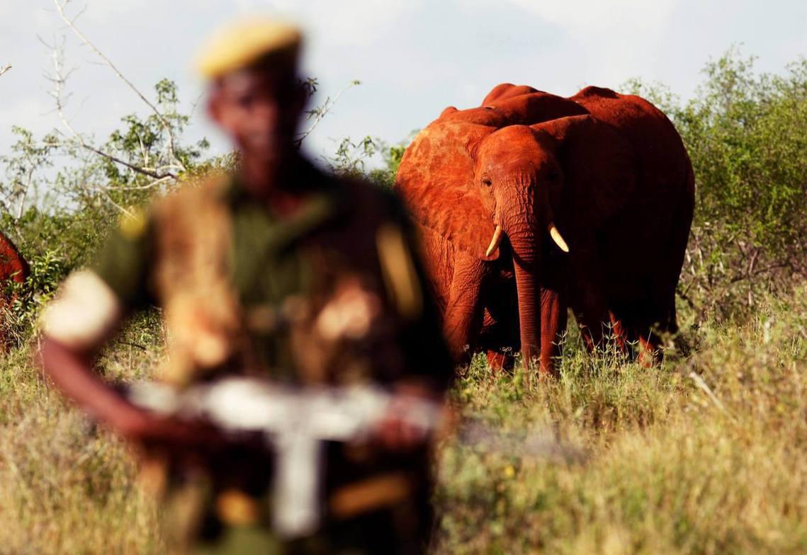 為了守護最後一頭大象,是否寧可濫殺無辜?《BuzzFeed》獨家調查報導,指控「...