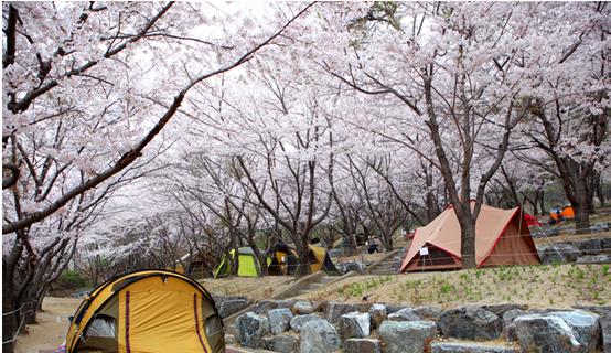 八公山道立公園 圖/ 韓國觀光公社