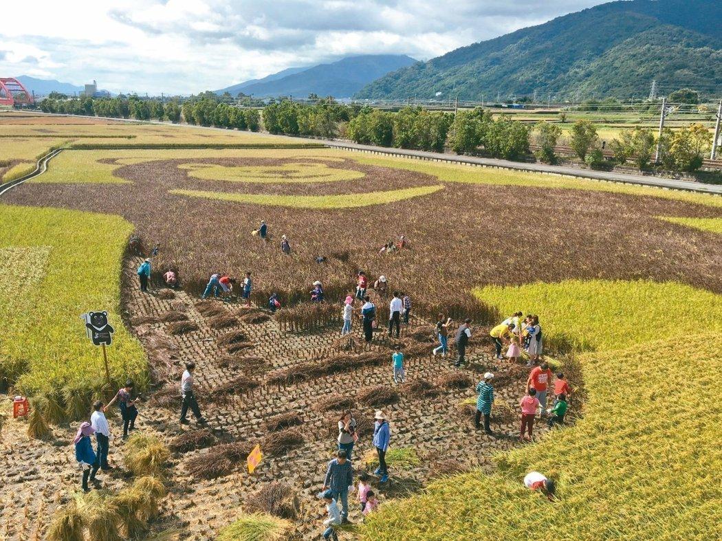 「玉里熊讚」以稻田彩繪方式在花東縱谷亮相。 圖/聯合報系資料照片
