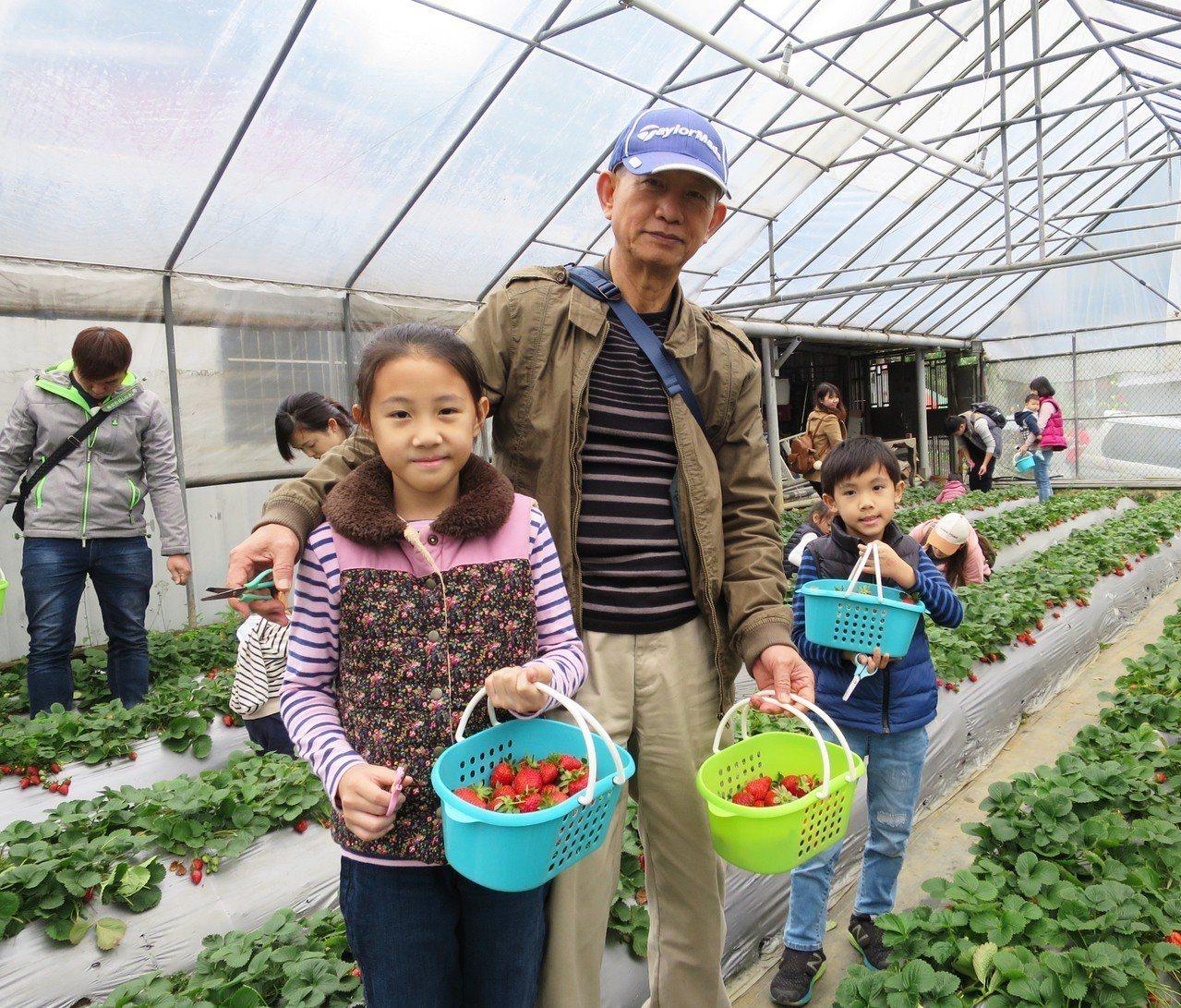 北市「2019內湖草莓季」9日登場。圖/北市產發局提供