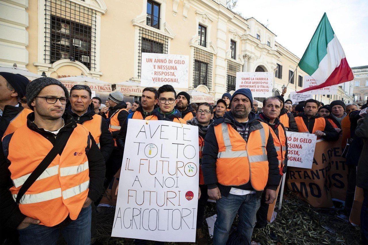義大利橄欖農穿上橘背心,2月14日在羅馬街頭抗議,要求政府補貼。歐新社