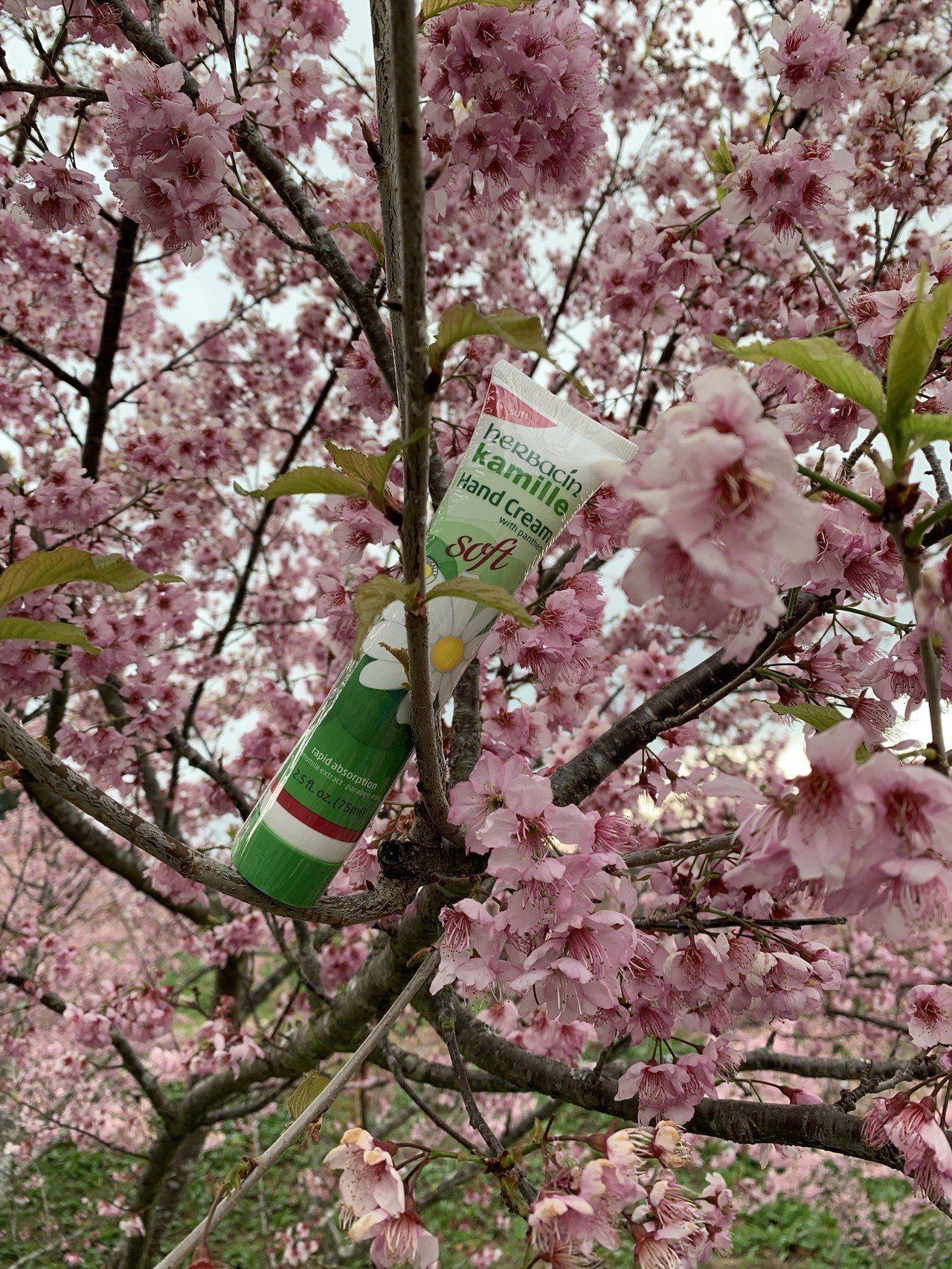 德國小甘菊今年推出新包裝的「柔皙護手霜。 德國小甘菊/提供