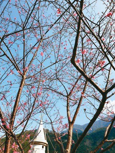 春暖花開、風光明媚,陪家人到郊外賞花踏青、活動筋骨。 圖/可凡(高雄市)
