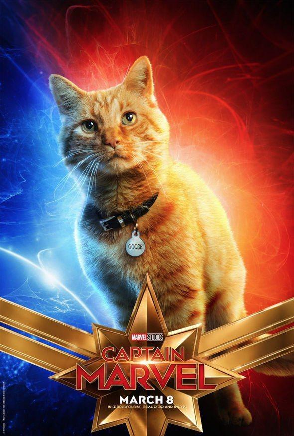 這隻叫「呆頭鵝」的貓,公認是「驚奇隊長」最搶戲的焦點。圖/摘自imdb