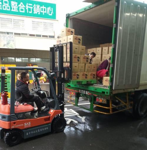 台中市首批20公噸茂谷柑,今天上午銷往馬來西亞。圖/台中市農業局提供