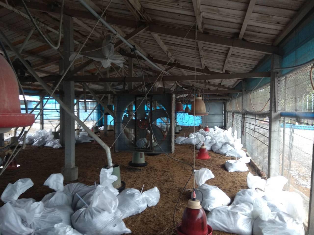 彰化縣大城鄉1家土雞場飼養的土雞暴斃,確診為H5N2亞型高病原性禽流感,昨天防疫...