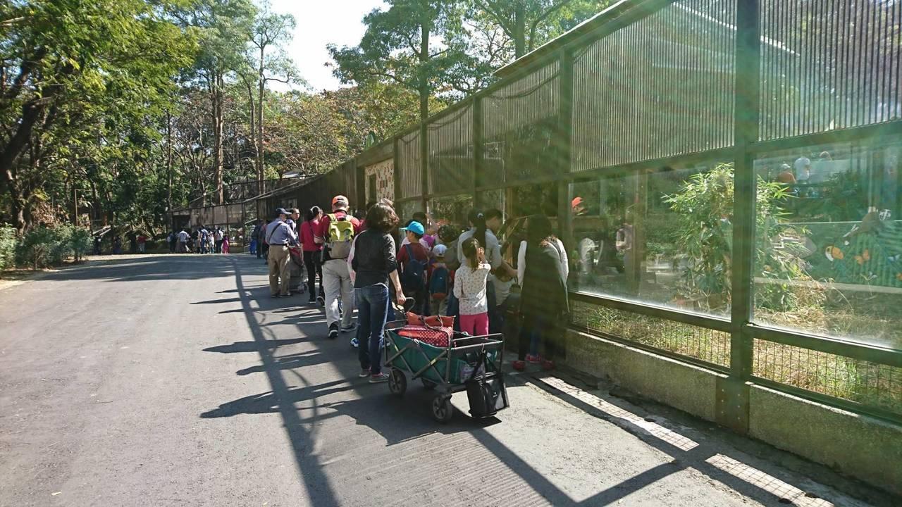 高雄市壽山動物園在做歡迎貓熊的準備。記者謝梅芬/攝影