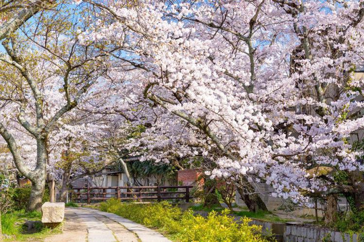 日本京都「哲學之路」。圖/Agoda提供