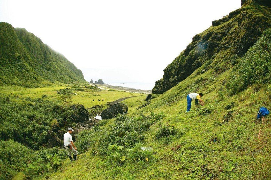 紫苞舌蘭引回蘭嶼現地栽種工作情形。 圖/李權裕提供