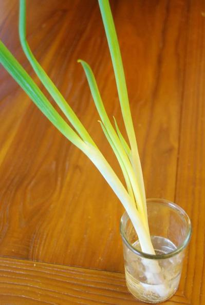 瓶裡的水淹過青蔥的根鬚即可。
