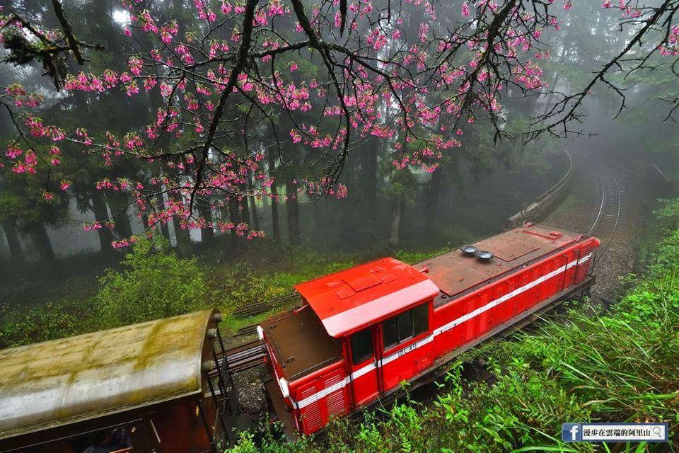 阿里山森林遊樂區林鐵小火車。。圖/黃源明提供