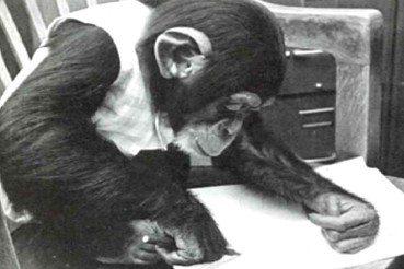 蕭人瑄/黑猩猩露西,人類文明中令人謙卑的身影