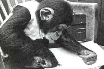 黑猩猩露西,人類文明中令人謙卑的身影