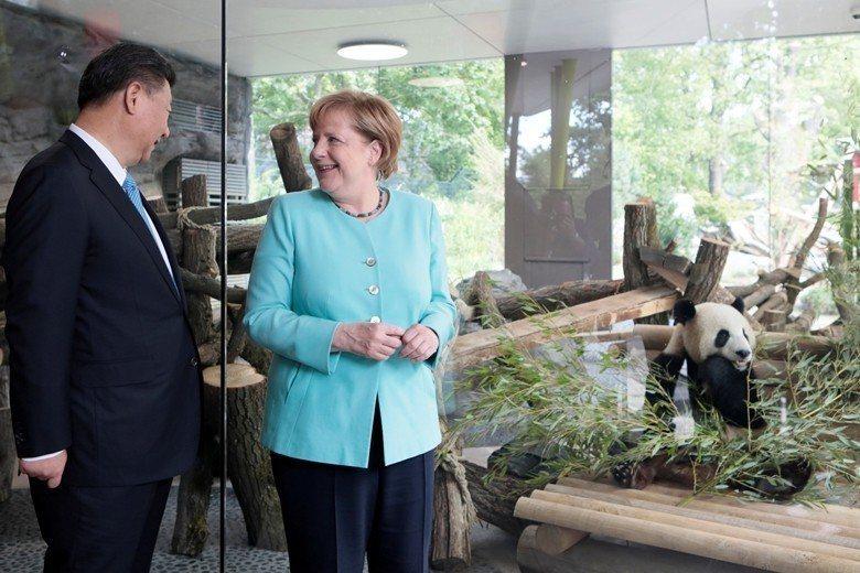 德國總理梅克爾與中國國家主席習近平一同到柏林動物園看中國熊貓。 圖/路透社