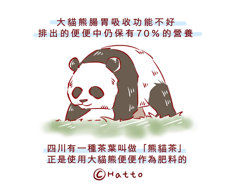 註:「熊貓茶」為沿用中國名稱。