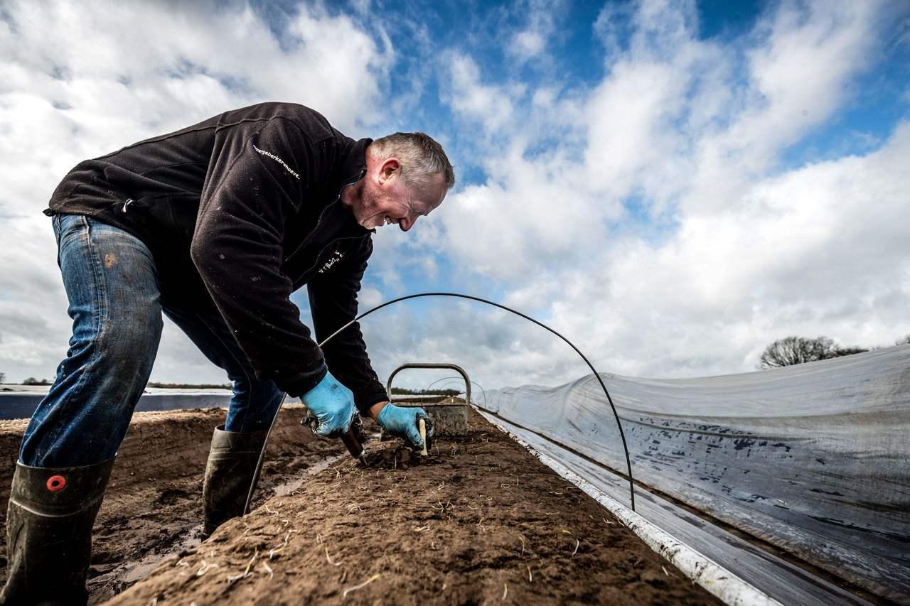 華盛頓州可望成為全美第一個合法將人類遺體分解成肥料的州,圖為農民在田裡工作。法新...
