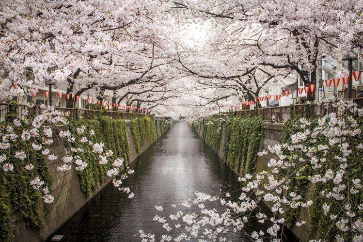 日本即將於3月底迎來賞櫻季。圖/Airbnb提供
