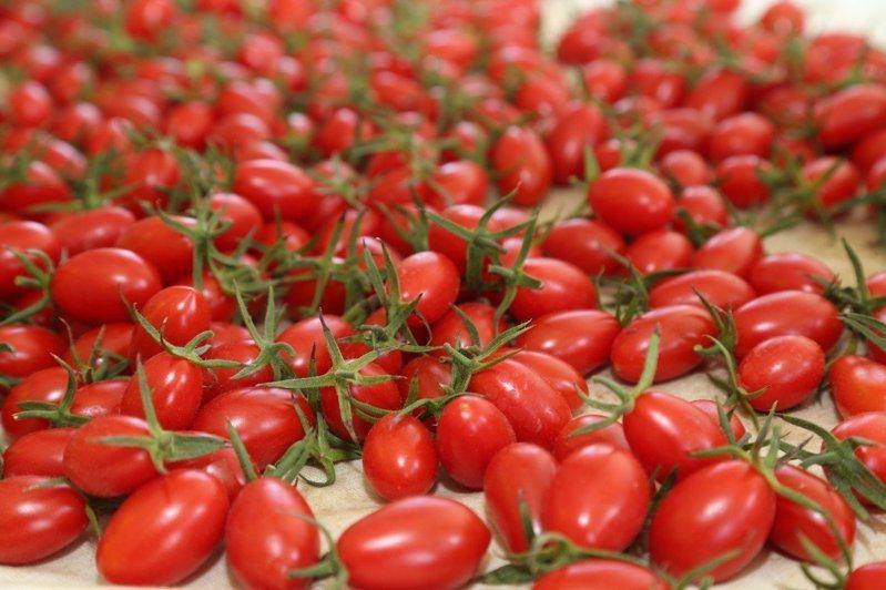 有人認為番茄籽多不宜拿來當供品祭拜。圖/聯合報系資料照