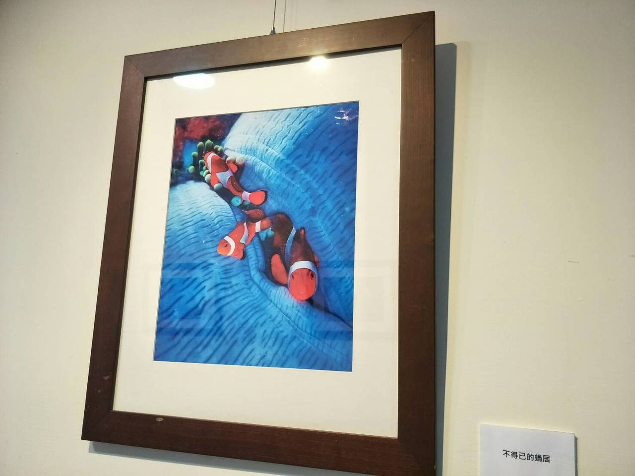 童綜合醫院骨科醫師郭家孝喜歡攝影和潛水,目前在醫院的攝影展「 水底情深」是他的作...
