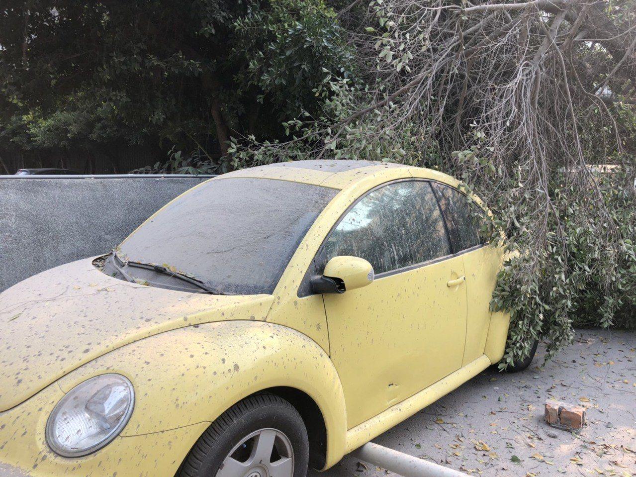 高雄市舊七賢國中校舍、路樹倒塌波及路邊停車。記者謝梅芬/翻攝