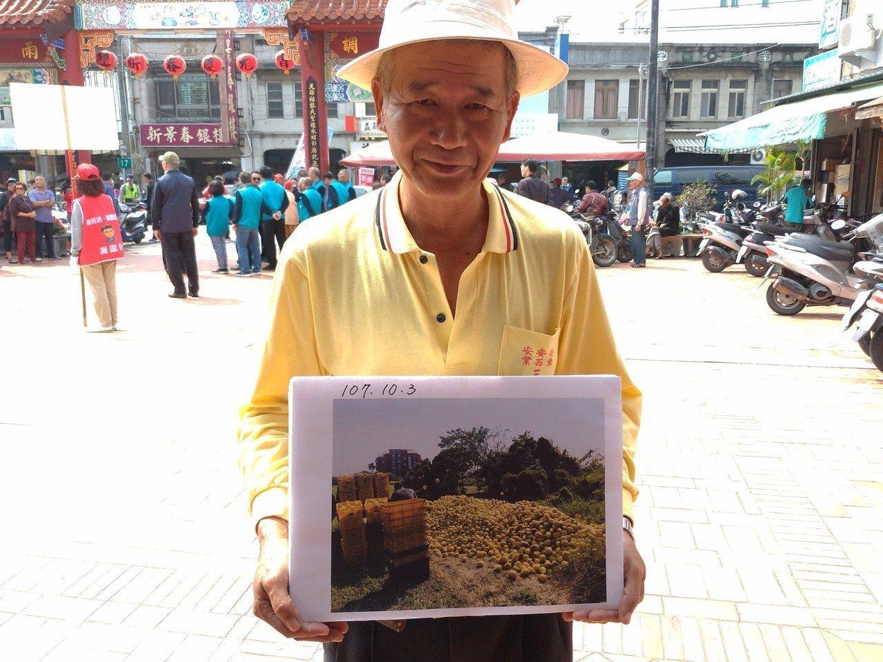 柚農出示去年文旦滯銷棄置農園照片。記者莊琇閔╱攝影