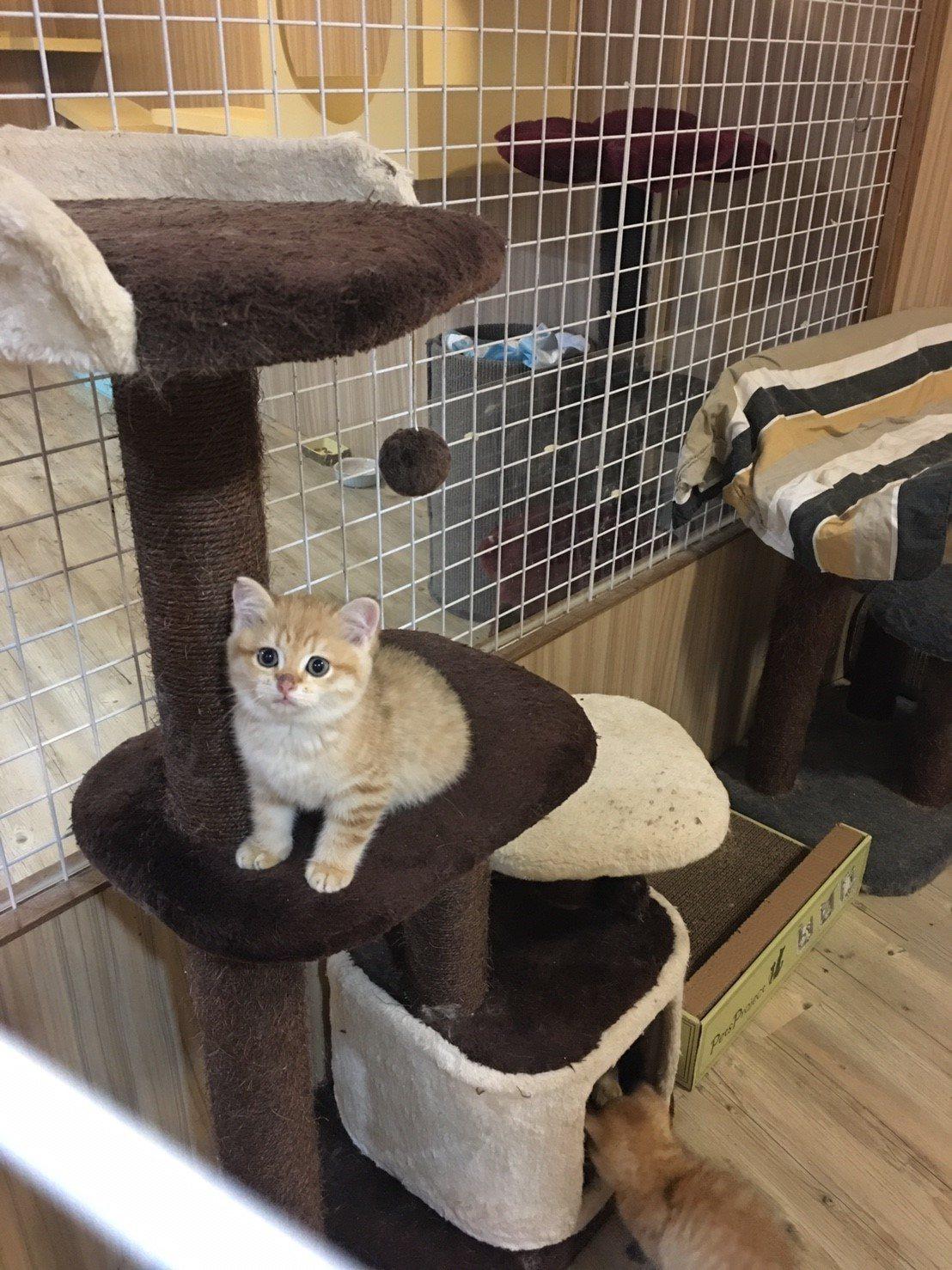 台北市動保處今天表示,日前接獲民眾反映,松山區某寵物業者無照經營貓隻繁殖及買賣業...