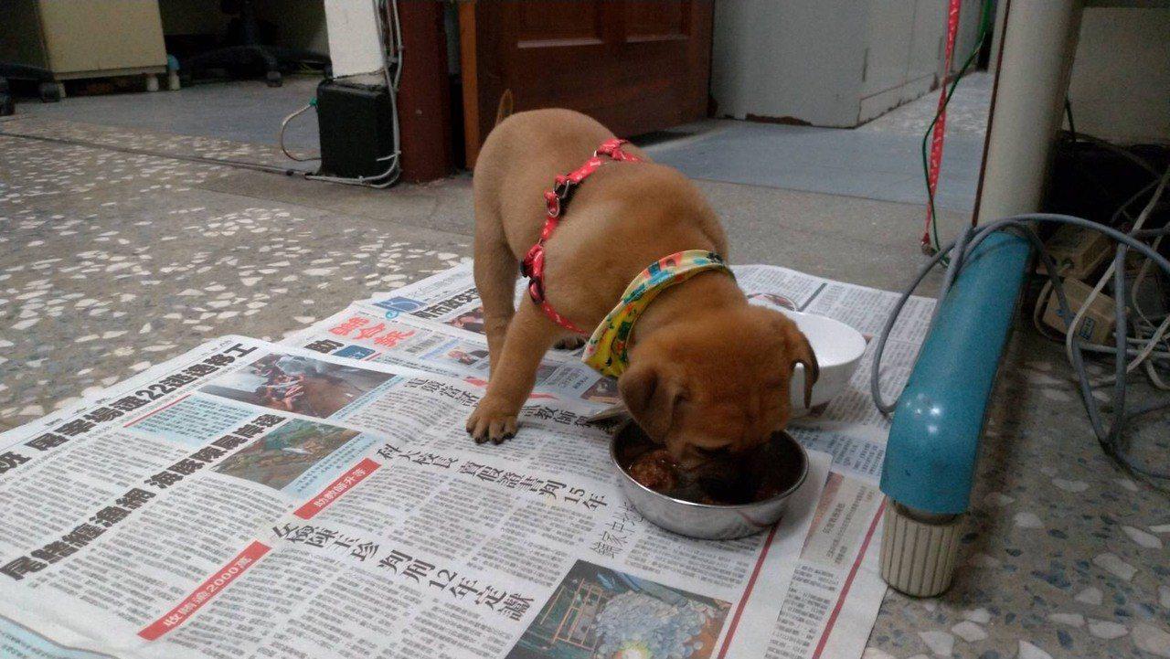 自105年10月起,基隆查獲棄養動物均採最高罰鍰15萬元,圖為三分局認養的警犬小...