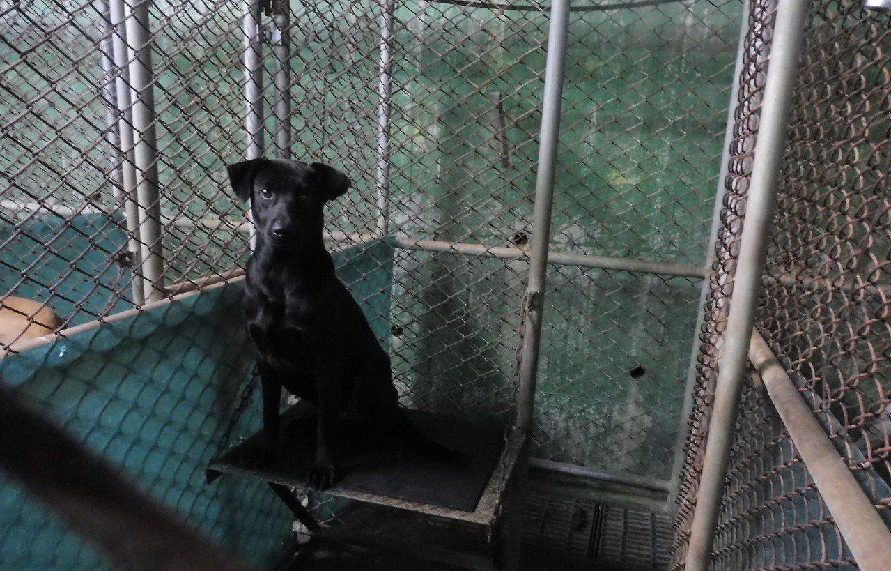 自105年10月起,基隆查獲棄養動物均採最高罰鍰15萬元。圖/基隆動保所提供