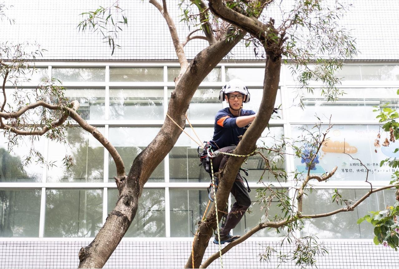 30歲樹藝師吳宇軒指,樹藝師工作正是規劃栽種植物及樹木,監察它們健康成長,同時確...