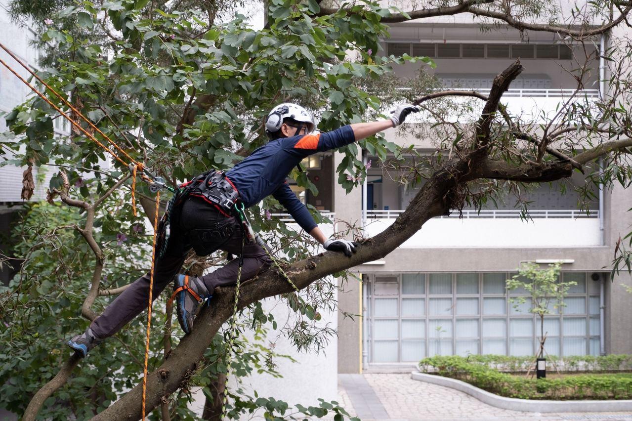 他期望未來可以攻讀園藝管理相關的碩士,以及取得攀樹師的資格,繼續投身行業。香港0...