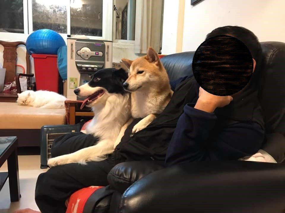 網友在臉書上分享父母對養寵物前後的態度轉變。圖擷自爆怨公社