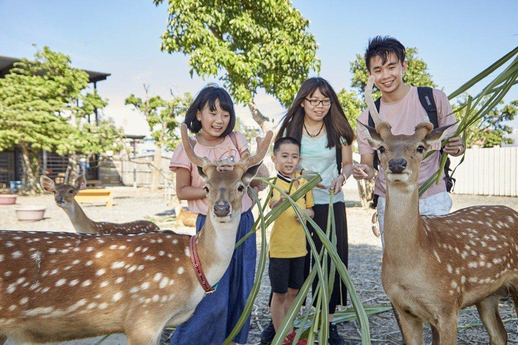 清明婦幼連假期間,住墾丁福容偶爾還能看見野生的梅花鹿。福容大飯店/提供