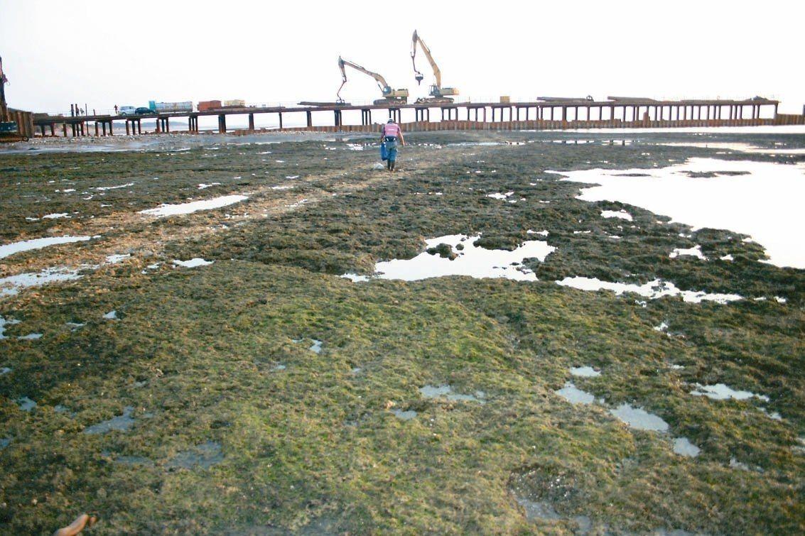 台灣中油公司所提第三座天然氣接收站計畫,許多環團抗議認為此開發危及當地藻礁。 本...