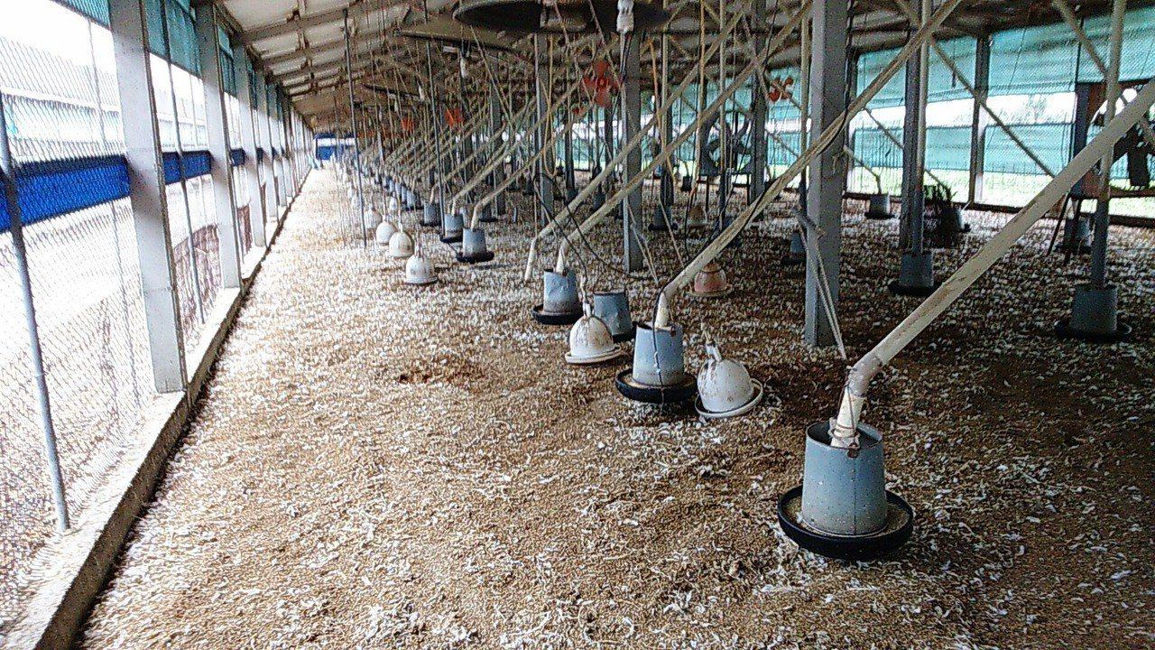 芳苑鄉有一家中型土雞場傳出禽流感疫情,全場土雞遭撲殺後淨空清毒。照片/彰化縣動物...