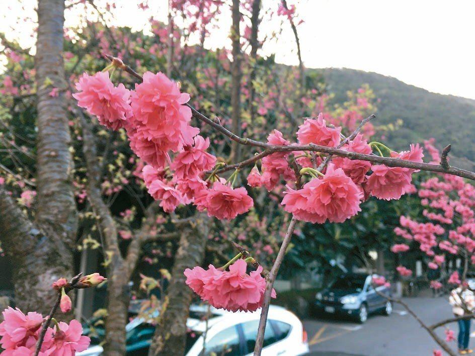 春暖花開的美景。 本報資料照片