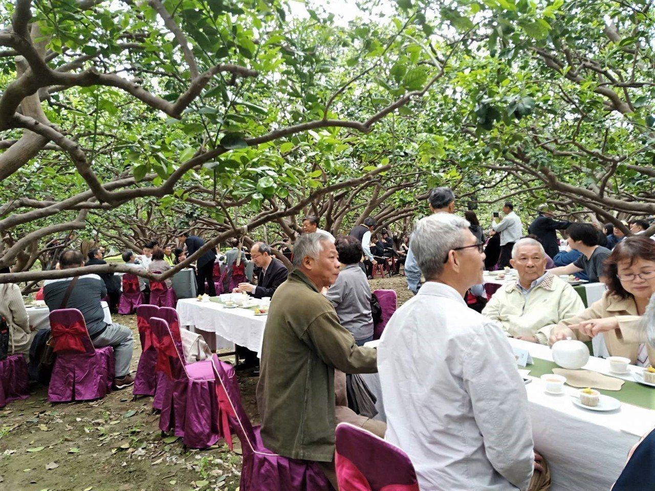 台南市文化局今天在麻豆區磚井社區柚花巷舉辦的「柚花巷茶席音樂會」,在柚花清香中品...
