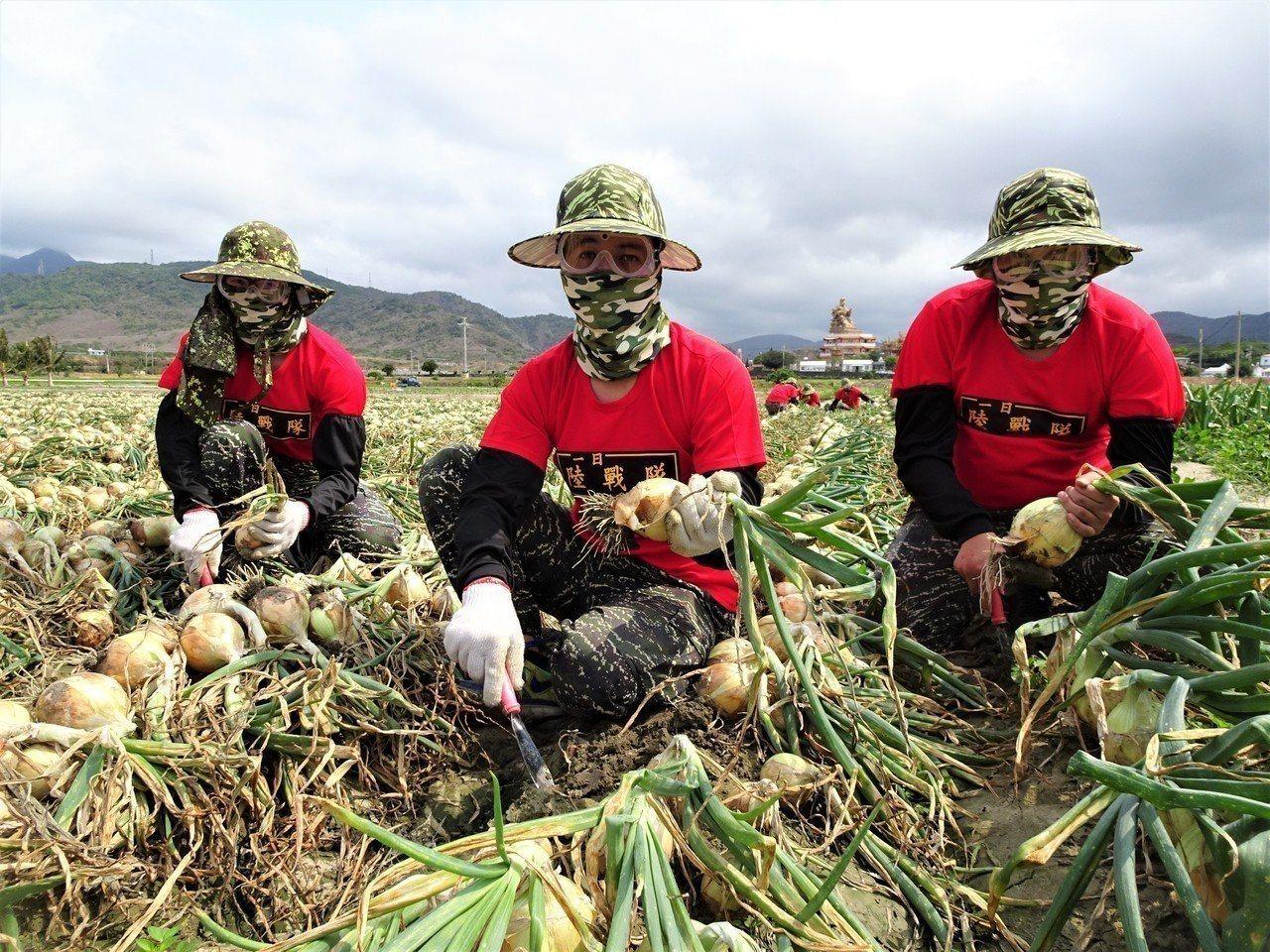 海軍陸戰隊在屏東縣恆春半島行之有年的洋蔥助收,引發月薪近4萬軍人「不務正業」當免...