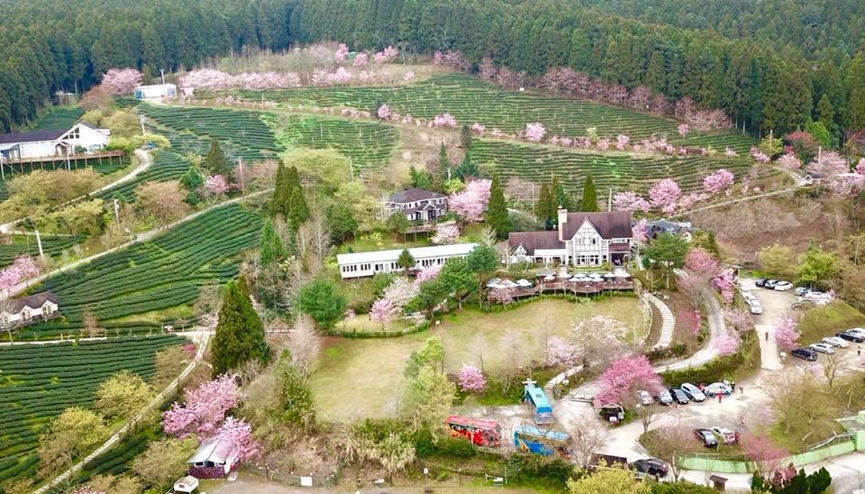 圖/山上人家座落在大隘白蘭休閒農業區附近,海拔1200公尺,面積五公頃,鄰近參山...