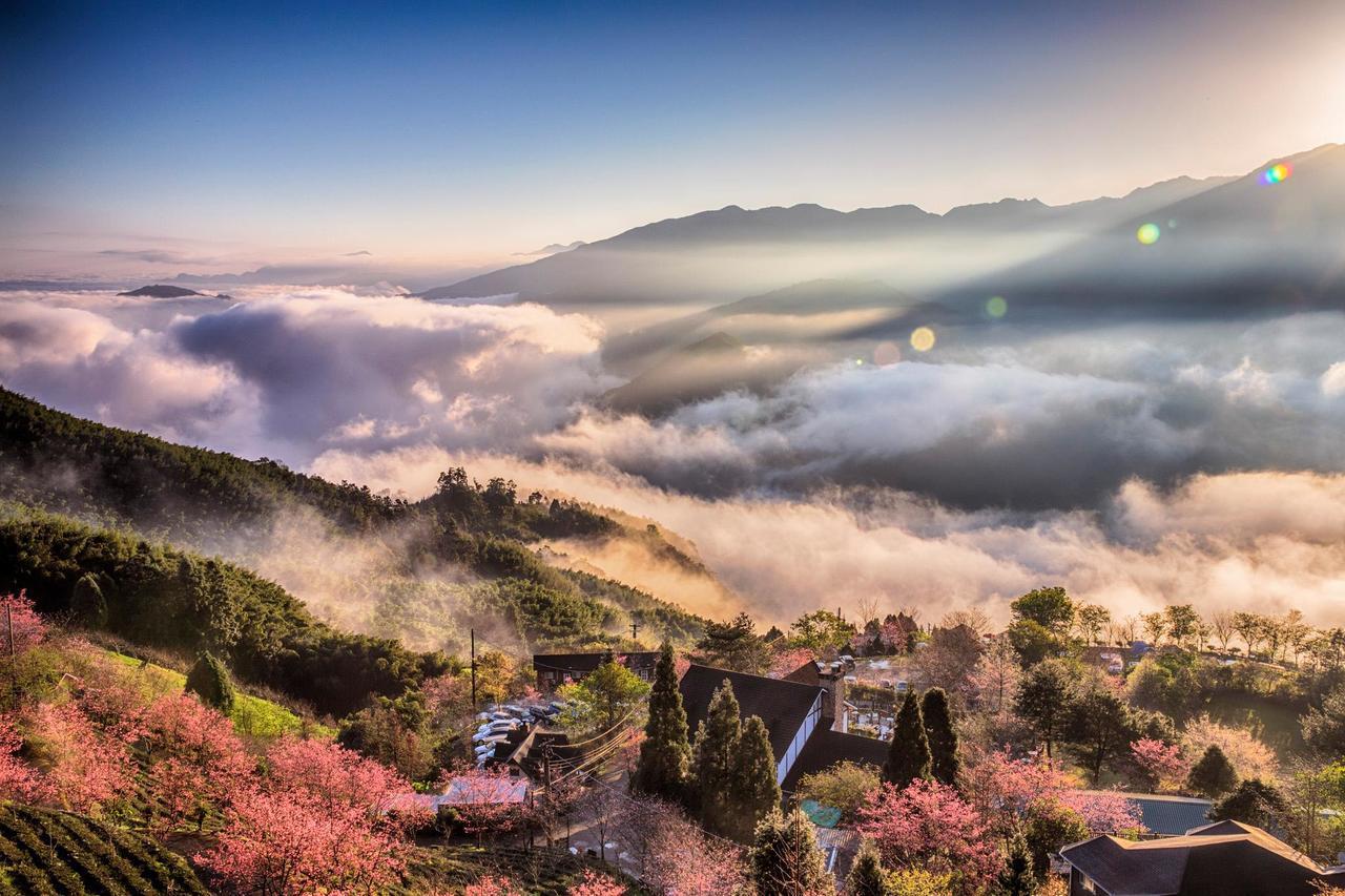 圖/園區往下眺望,可以360度盡覽蓊鬱茶園和高山,構成季節限定的風景畫。網友曾信...