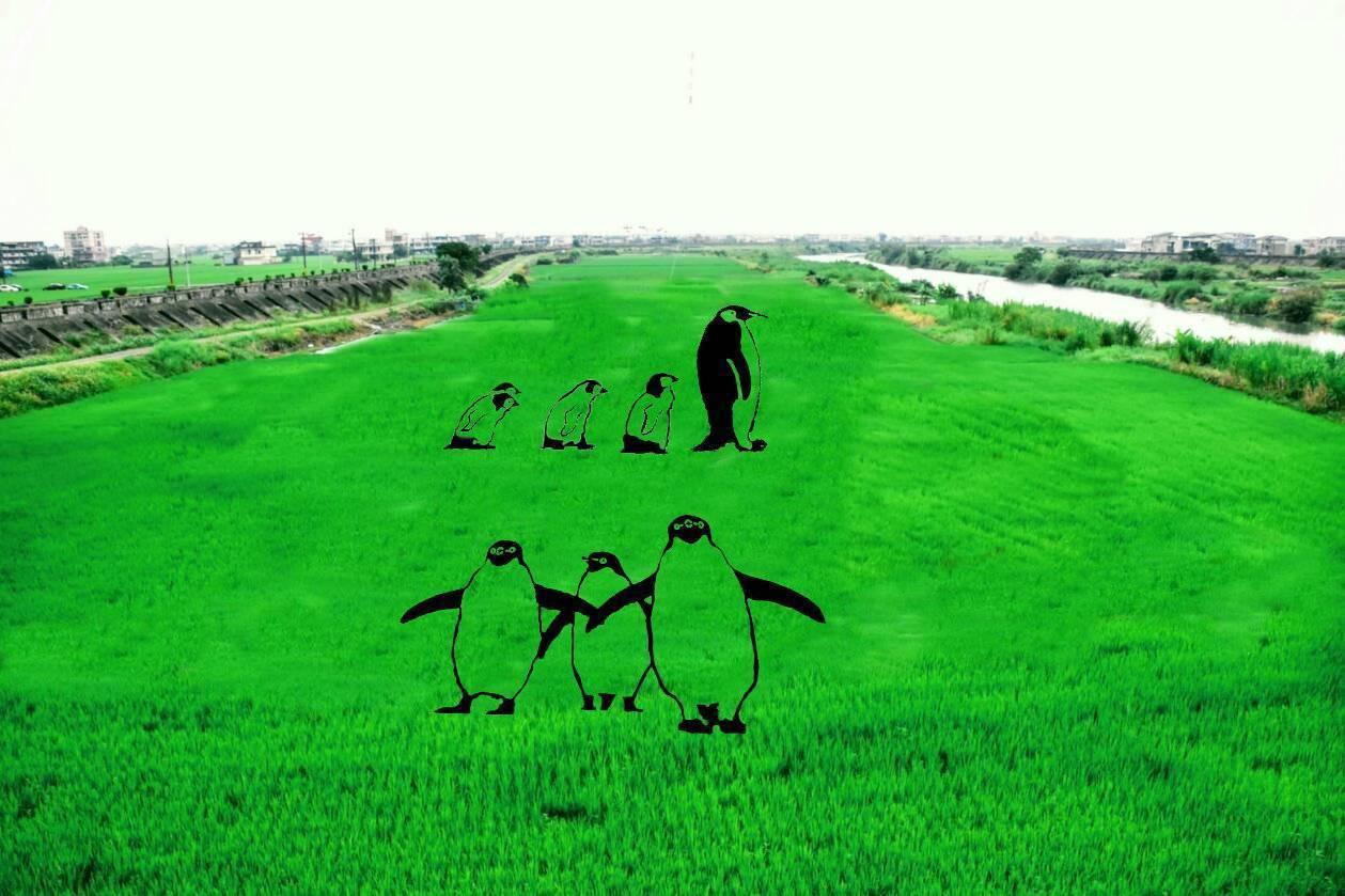 壯圍鄉公所預計今年在田中能「長」出企鵝家族,此為企鵝家族設計圖。圖/壯圍鄉公所提...