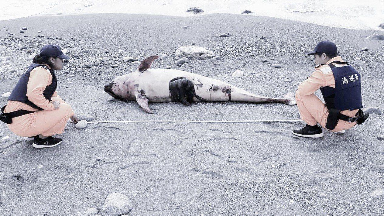 台東成功海域昨天發現死亡花紋海豚。圖/取自海洋保育署臉書